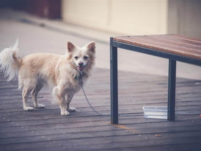 Fun Ways to Exercise Your Dog Thumbnail