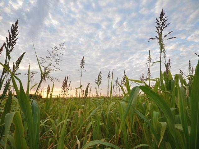 Organic Farming the Future